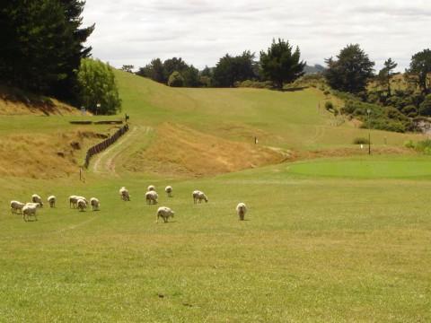 Golf i Nya Zeeland - Resor till Nya Zeeland