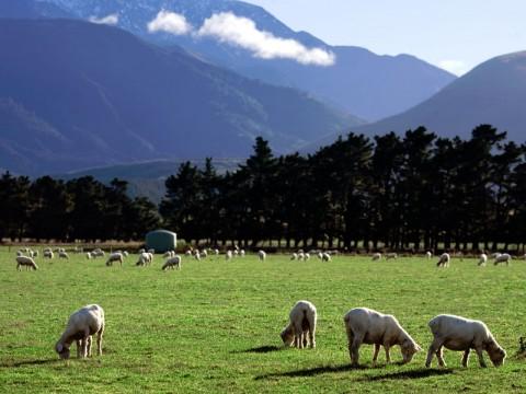 Vaccinering inför resa till Nya Zeeland